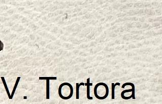 Vintage_TortoraKGl5evaIAcGS3
