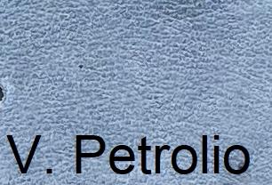Vintage_PetrolioXMxHvr4PRzQK9