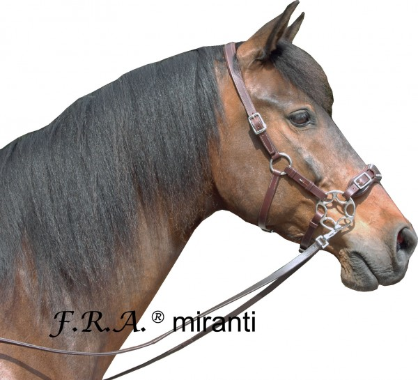 Hackamore - Miranti