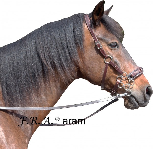 Hackamore - Aram