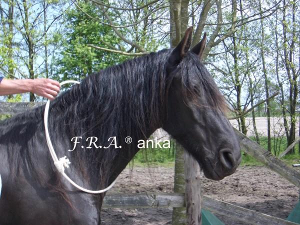 Halsring - Anka